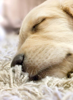 pet stain removal and odor removal